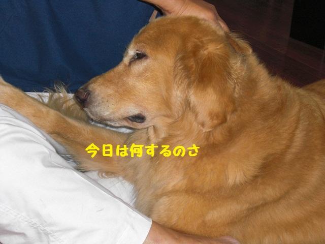 f0114128_19354696.jpg