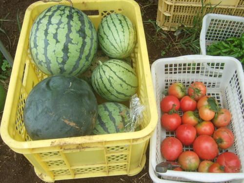 暑くても野菜は育つ.....草取りは大変です。_b0137932_1821168.jpg
