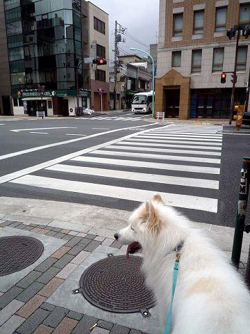 ちょっと涼しい朝散歩_c0062832_188363.jpg