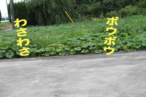 b0192138_14184526.jpg