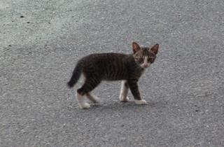 そと猫のお友だち めずらしっぽくん編。_a0143140_9432993.jpg