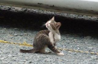 そと猫のお友だち めずらしっぽくん編。_a0143140_9442981.jpg