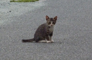 そと猫のお友だち めずらしっぽくん編。_a0143140_944571.jpg