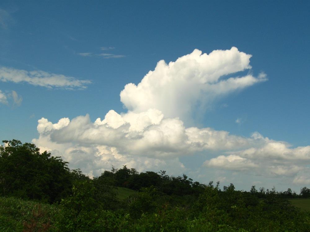 なにかのいきものみたいな雲_d0001843_0173842.jpg