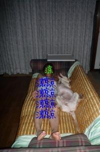 f0177261_1041140.jpg