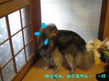 浜松ビール♪_a0119263_15315316.jpg