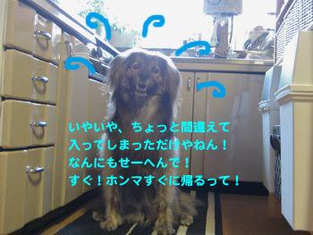 浜松ビール♪_a0119263_15322679.jpg
