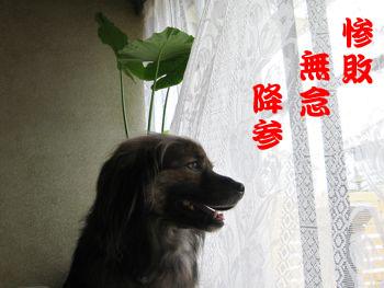 浜松ビール♪_a0119263_15375988.jpg