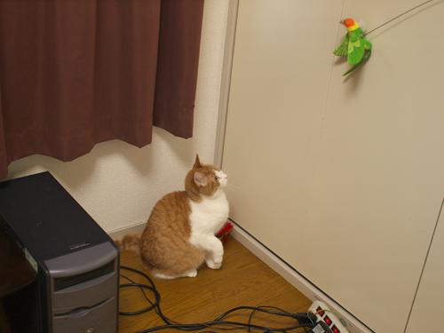 【紅姫】 鳥玩具遊び01:ハイジャンプ_a0066779_2316142.jpg