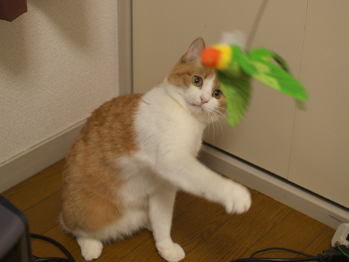 【紅姫】 鳥玩具遊び01:ハイジャンプ_a0066779_23235184.jpg