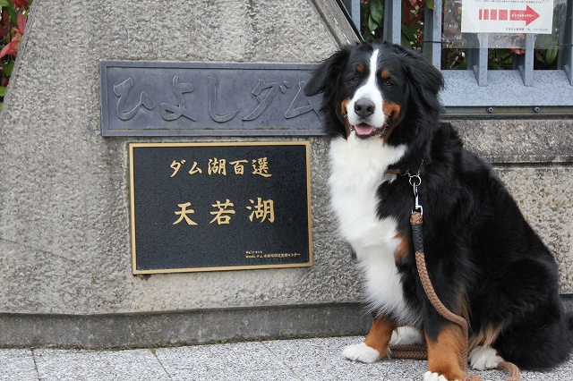京都へ_b0135889_2112566.jpg