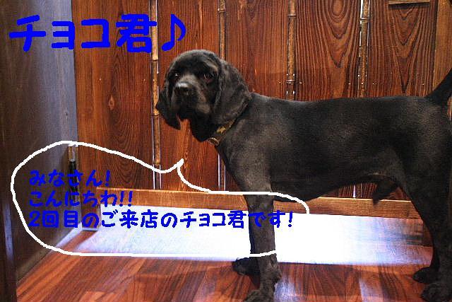 b0130018_1435436.jpg