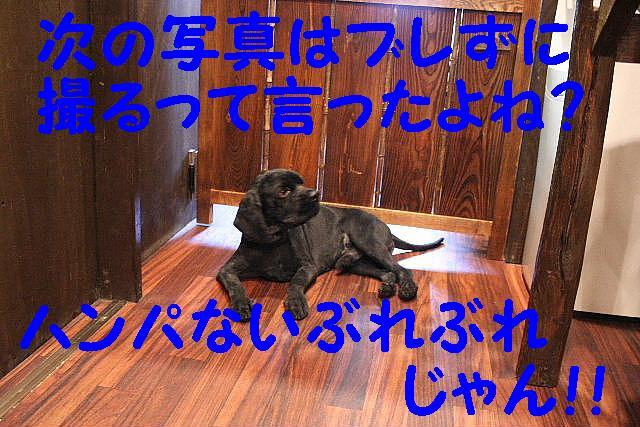 b0130018_144770.jpg