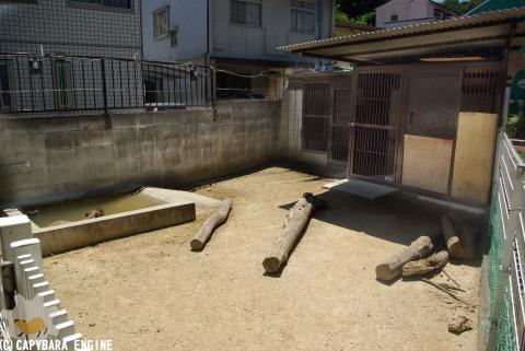 改装・岡山カピバラ展示場_f0138828_1536568.jpg