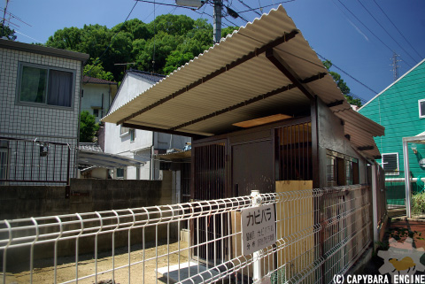 改装・岡山カピバラ展示場_f0138828_15371498.jpg