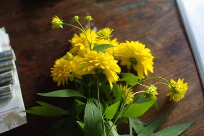 裏庭のキクっぽい花と、女神湖花火大会_c0110869_22421858.jpg