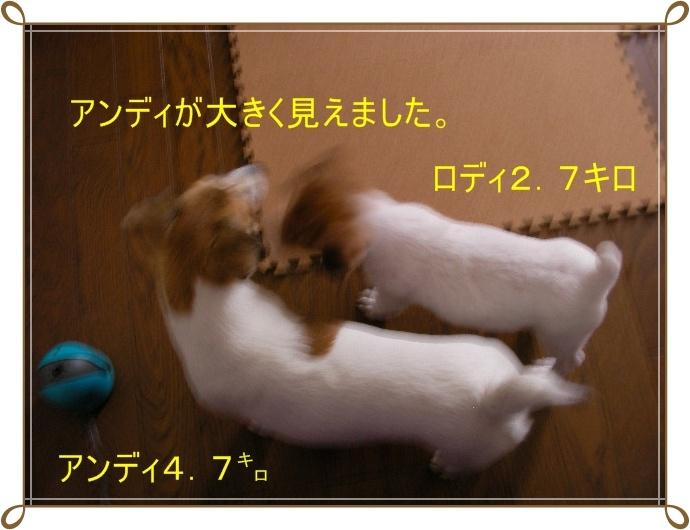c0214384_11432034.jpg