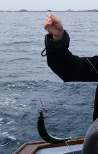 驚愕の大漁サバ釣りツアー体験記_e0030586_20254193.jpg