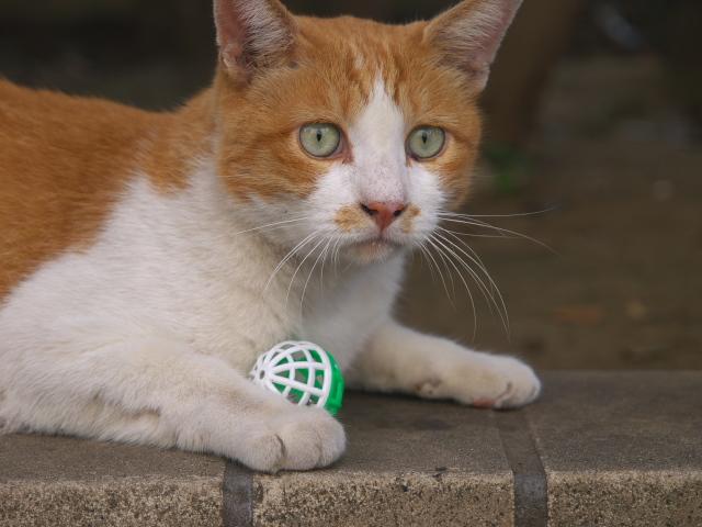 東京の風景 やっぱり猫も好き_f0024992_812958.jpg