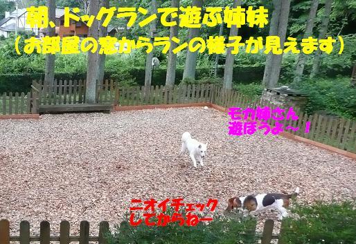 f0121712_12243250.jpg