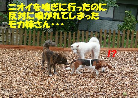 f0121712_13563430.jpg