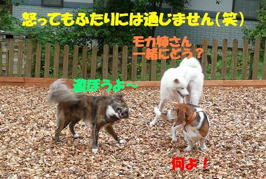 f0121712_13564145.jpg
