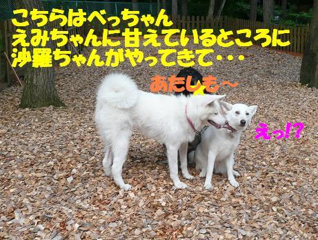 f0121712_14105317.jpg