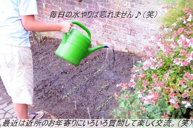 たっぷり夏野菜そぼろとん汁♪_d0104926_1262623.jpg