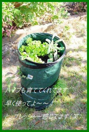 たっぷり夏野菜そぼろとん汁♪_d0104926_1264311.jpg