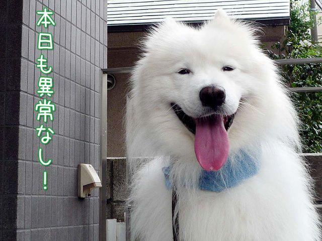 またまたお寝坊おば散歩_c0062832_1710272.jpg
