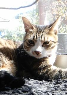 猫のお友だち じょあんちゃん はんくすちゃん くましーちゃん編。_a0143140_2019241.jpg