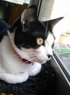 猫のお友だち じょあんちゃん はんくすちゃん くましーちゃん編。_a0143140_20203491.jpg