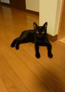 猫のお友だち じょあんちゃん はんくすちゃん くましーちゃん編。_a0143140_20224741.jpg