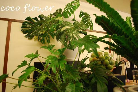観葉植物ゾーン_c0130553_19401145.jpg