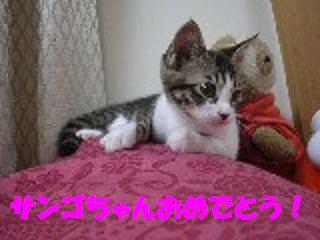 d0027698_1685970.jpg