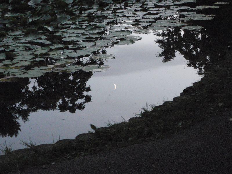 大野池の月見夕涼み_c0025115_21335114.jpg