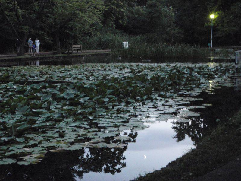 大野池の月見夕涼み_c0025115_21335312.jpg