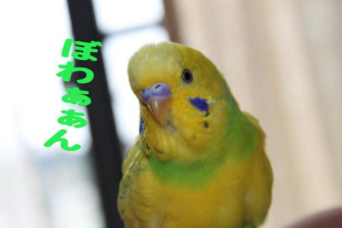 b0192138_1236321.jpg