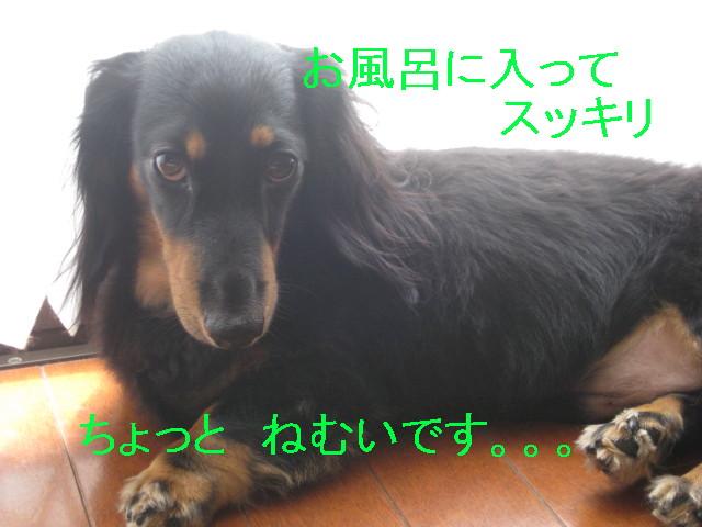 b0181341_13472645.jpg