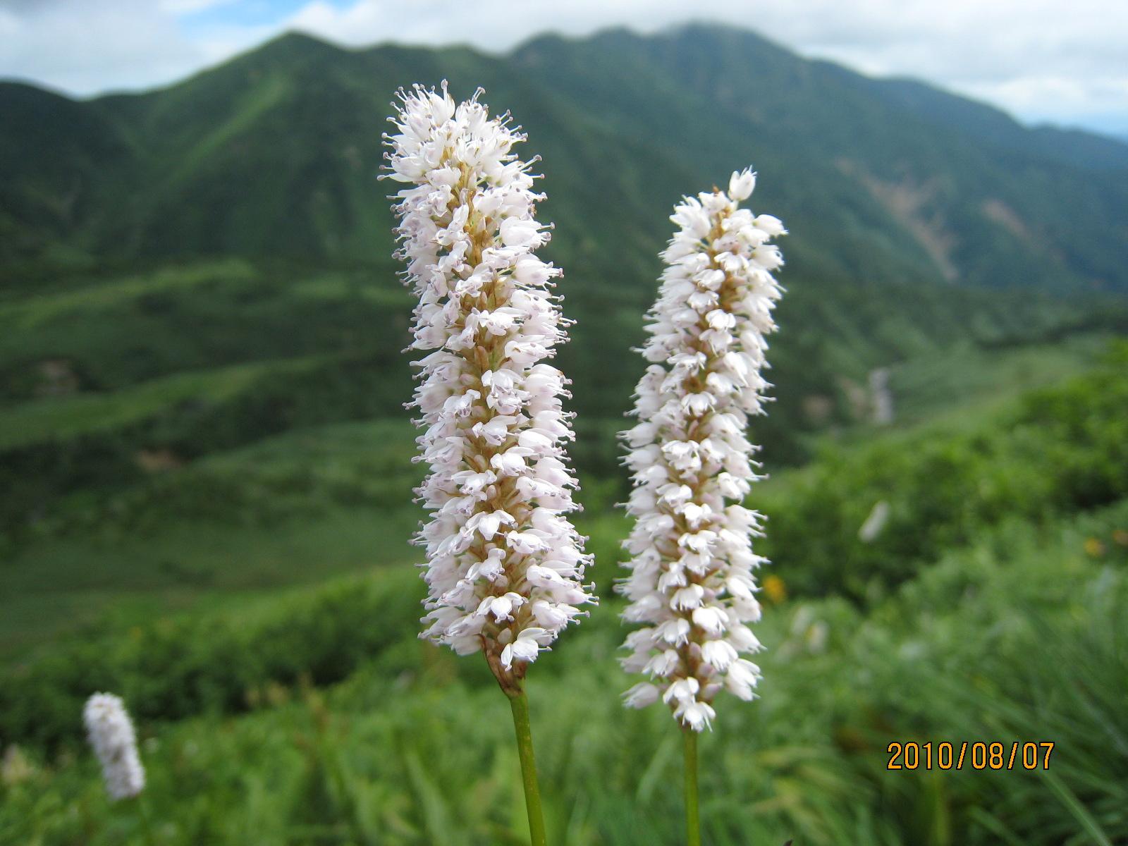 恒例の白山登山へ_e0121558_1271131.jpg