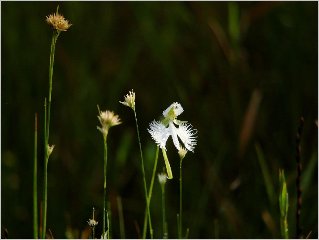 湿原の朝_c0198669_13504365.jpg