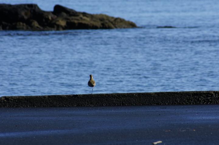 HAWAII\'S BIRDS その3_f0189086_1721496.jpg