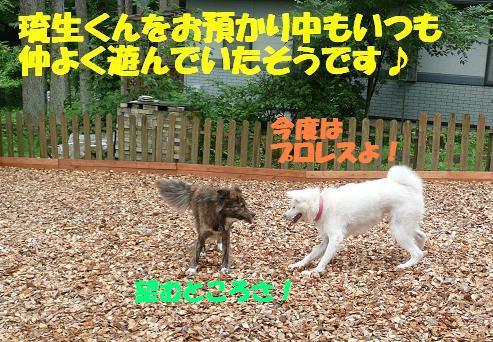 f0121712_15492353.jpg