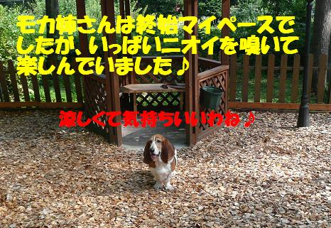 f0121712_1705780.jpg