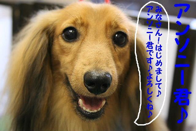 b0130018_16261712.jpg