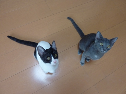 猫のお友だち 銀くん こちびちゃん編。_a0143140_21311237.jpg