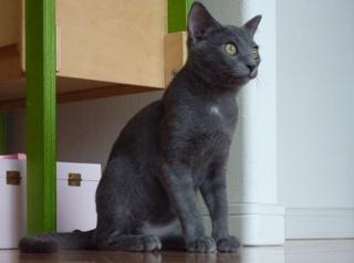 猫のお友だち 銀くん こちびちゃん編。_a0143140_21323092.jpg