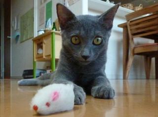 猫のお友だち 銀くん こちびちゃん編。_a0143140_21345498.jpg