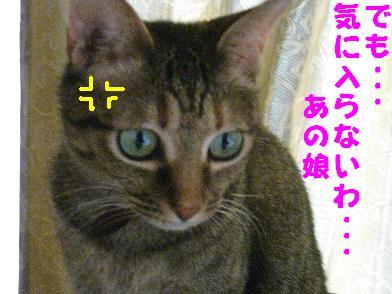 b0151748_1014135.jpg