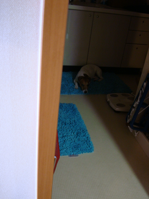 暗い犬_d0143957_1514185.jpg